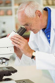 Senior scientist working with microscope — Stock Photo