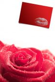 Pink rose against red card — Foto de Stock