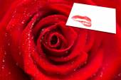 Red rose with dew drops against card — Стоковое фото