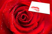 Red rose with dew drops against card — Stock Photo