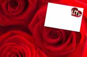 Three red roses against white card — Stock Photo