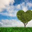 Heart shaped plant against green grass — Stock Photo #68927445