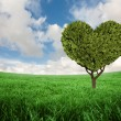 Heart shaped plant against green grass — Stock Photo #68929455