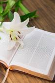 Lily Květina na otevřené Bibli — Stock fotografie