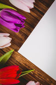 Tulips forming frame around white card — 图库照片