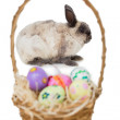 Bunny with basket of Easter eggs — Stock Photo #68978263
