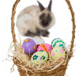 Basket of Easter eggs with rabbit — Stock Photo #68979511