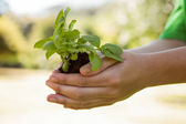 Environmental activist showing a plant — Stock Photo