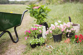 Potted flowers ready to be planted — Stock Photo