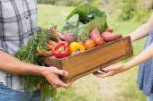 Farmer giving box of veg to customer — Stock Photo