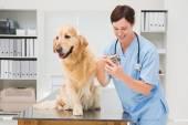 Vet using nail clipper on a dog — Stock Photo