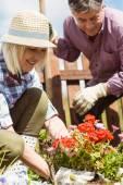 Счастливый Пожилая пара, Садоводство вместе — Стоковое фото