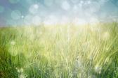 Light design shimmering on green — Fotografia Stock
