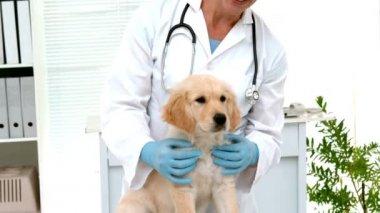 Smiling veterinarian examining a cute dog — Stock Video