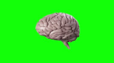 Brain on green screen background — Stock Video