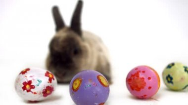 Easter bunny with colourful eggs — Stock Video