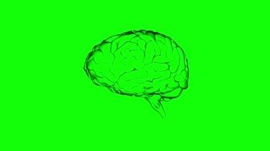 Brain on green screen background — Stock Video