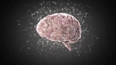 Brain on black background — Stock Video