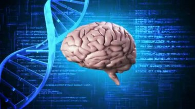 Brain spinning on dna background — Stock Video