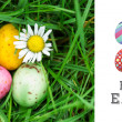 Small easter eggs nestled in the grass with a daisy — Stock Photo #73187011