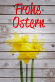 Frohe ostern against daffodils with stems — Stock Photo