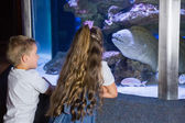 Little siblings looking at fish tank — Stock Photo