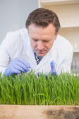 Scientist examining grass  — Stock Photo