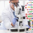 Scientist analysing petri dish with the microscope — Stock Photo #73291061
