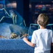Young man looking at giants crabs — Stock Photo #73427919