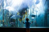 Young man touching a tank with big fish  — Foto Stock
