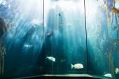 Sea life in a beautiful illuminating tank — Stock Photo