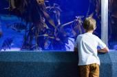 Young man looking at fish and algae tank  — Stock Photo