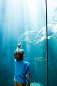 Young man pointing fish in a illuminate tank  — Stock Photo
