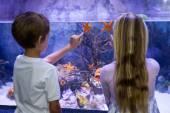 Children pointing at starfish in tank — Stock Photo