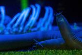 Sea slug in a darkest tank  — Stock Photo