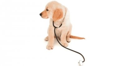 Cute puppy playing with stethoscope — Stock Video