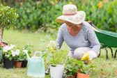 Happy grandmother gardening — Stock Photo
