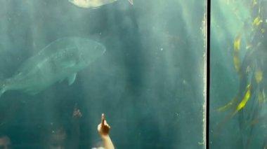 Family pointing at fish in the aquarium — Stockvideo