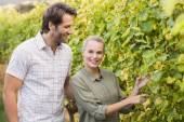 Two young happy vintners looking at camera — Stock Photo