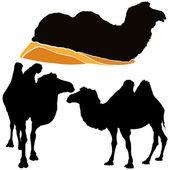 Camels — Vector de stock