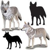 狼一套 — 图库矢量图片