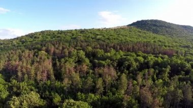 Balkan mixed forest, aerial view — Stock Video