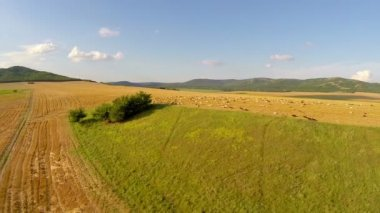 Aerial view of grazing animals on fertile land — Stock Video