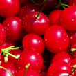 Freshly picked sour cherries closeup — Stock Video #52099215