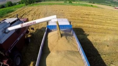 Combine harvester unloading grain into the truck — Stock Video