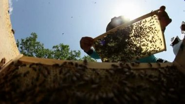 Beekeeper at work — Stock Video