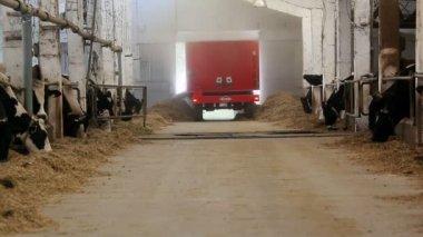 Fazenda de gado leiteiro — Vídeo Stock