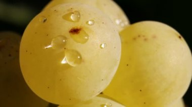 Grapes Closeup — Stock Video