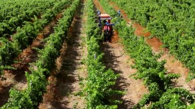 Mechanization of Vineyards — Stock Video