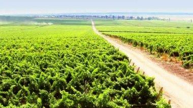 Vineyard timelapse — Stock Video